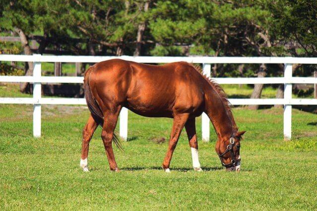 馬プラセンタ比較ランキング