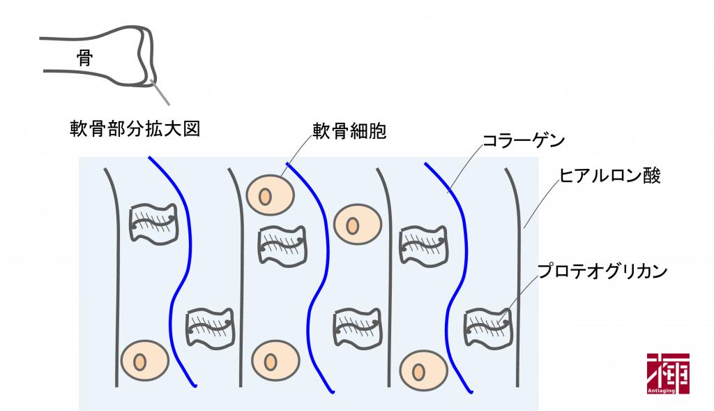 nankotsu2