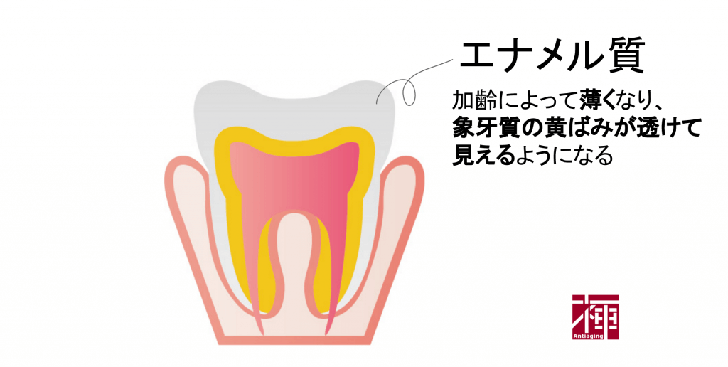 歯を白くする方法 加齢