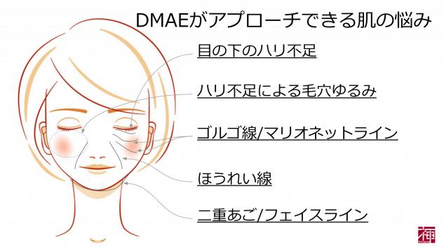 DMAE配合化粧品 効果