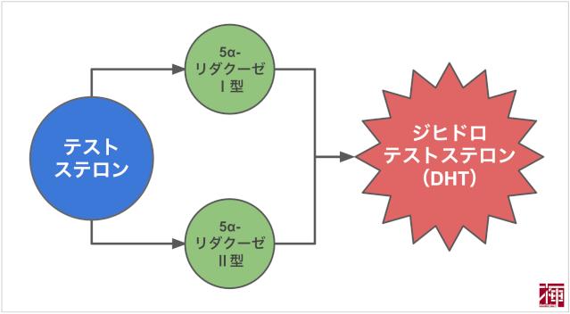 ジヒドロテストステロンの発生方法