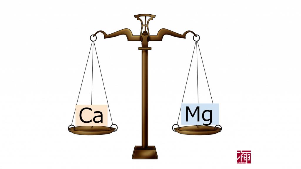 カルシウムとマグネシウムの関係