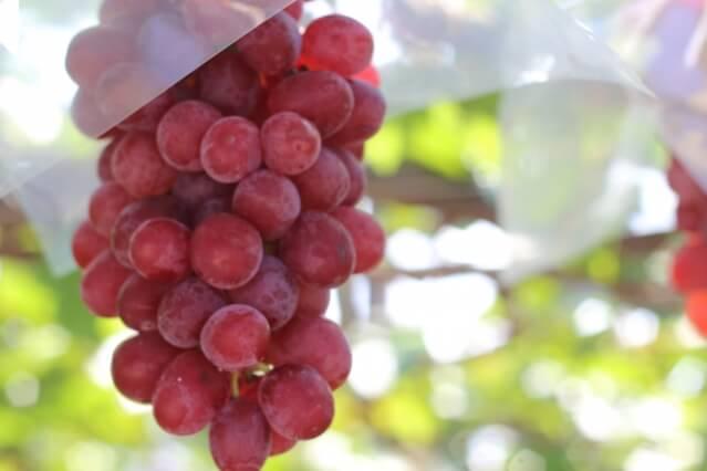 国産ワイン 日本食