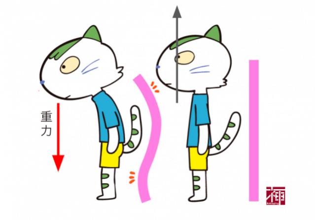 ほうれい線 猫背