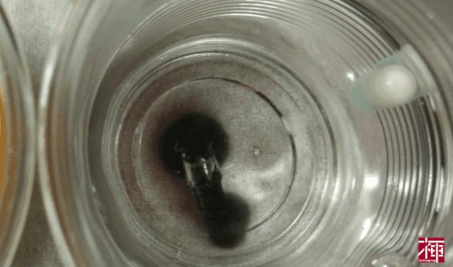ホコニコのラクトフェリン+乳酸菌 お湯