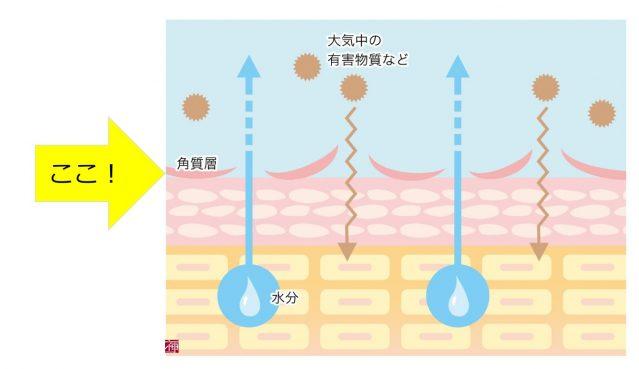 乾燥肌 化粧水