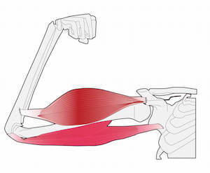 マグネシウム 効果 筋肉収縮