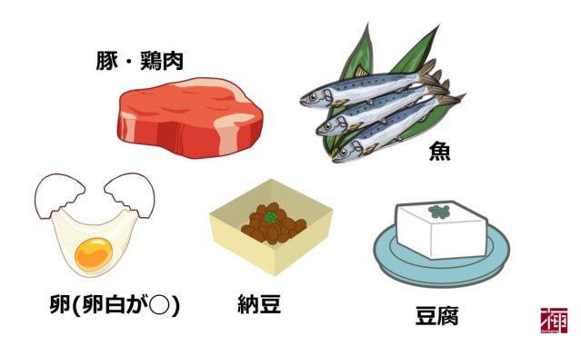 タンパク質を多く含む食べ物 美白