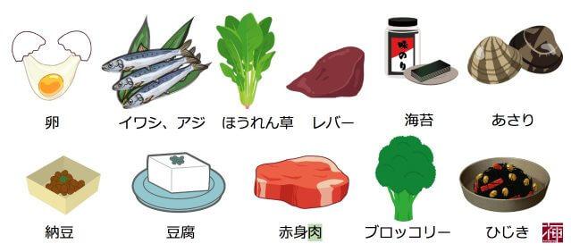 食べ物 ハリ タンパク質